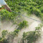 Câmara aprova projeto que flexibiliza uso de agrotóxico