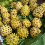 Ministério do Meio Ambiente divulga nova lista de espécies nativas
