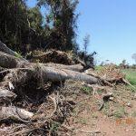 Sema e Fepam autuam responsáveis por desmatamento de 56 hectares de Mata Atlântica