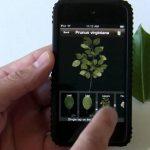 Três aplicativos para amantes de plantas e botânica
