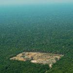 Instituto registra aumento de 15% de desmatamento da Amazônia em um ano